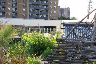 rooftop garden at Access Alliance on Danforth