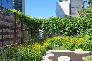 Native Child & Family Services rooftop garden