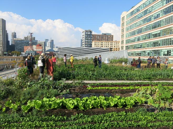 TUG projects - Toronto Urban Growers